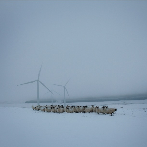Patricia flock of blackfaced ewes with windfarm turbines at Lauder, Scottish borders. From 'Drawn To The Land - Women Working the Scottish Landscape' by Sophie Gerrard.This is an image from 'Made in Scotland' an exhibition of contemporary photography by