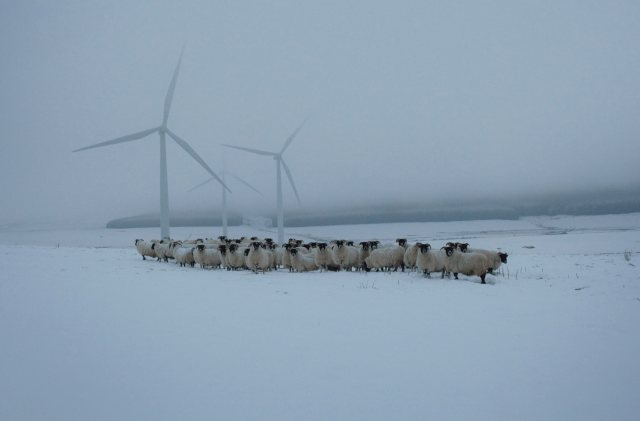 Patricia flock of blackfaced ewes with windfarm turbines at Lauder, Scottish borders. From 'Drawn To The Land - Women Working the Scottish Landscape' by Sophie Gerrard.This is an image from 'Made in Scotland' an exhibition of contemporary photography by Document Scotland to be held at Impressions Gallery, Bradford, from 20th June until 4th october, 2014. The show features new work by Document Scotland photographers Jeremy Sutton-Hibbert, Sophie Gerrard, Stephen McLaren and Colin McPherson.Photograph © Sophie Gerrard, 2013, all rights reserved. This image may be reproduced in print or online only in conjunction with a preview,  review, or publicity directly related to the staging of the 'Made in Scotland' exhibition and must include a mandatory byline identifying the photographer as the creator of this image. For all other usage of this image, please contact the copyright holder.